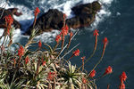 Title: Madeira Flowers