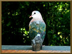 Title: Only a dove...