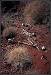 Title: Spinifex Grave