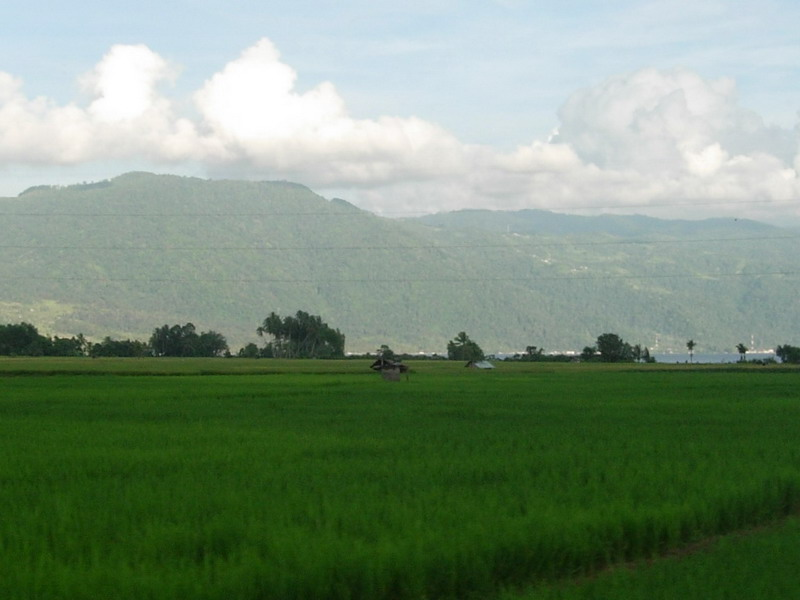 The Ricefield