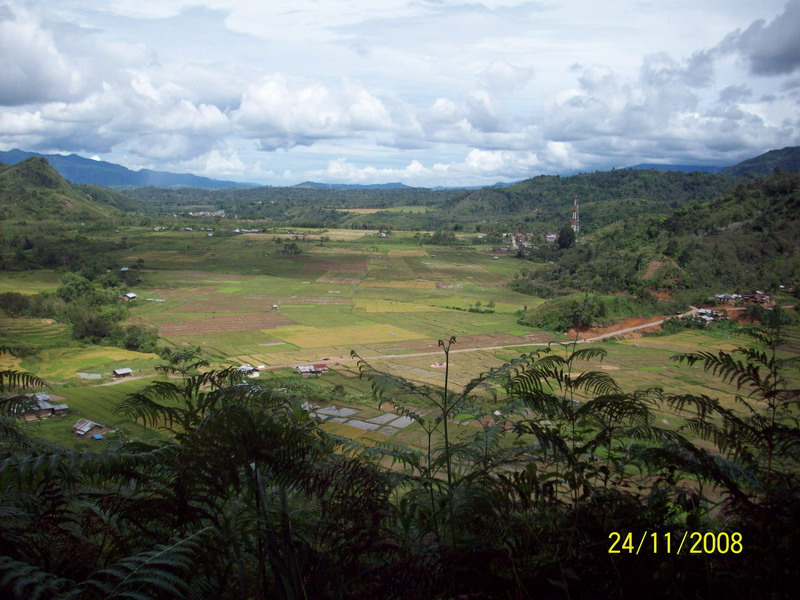 The Ricefield in the Valley