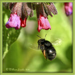 Title: Another Bee