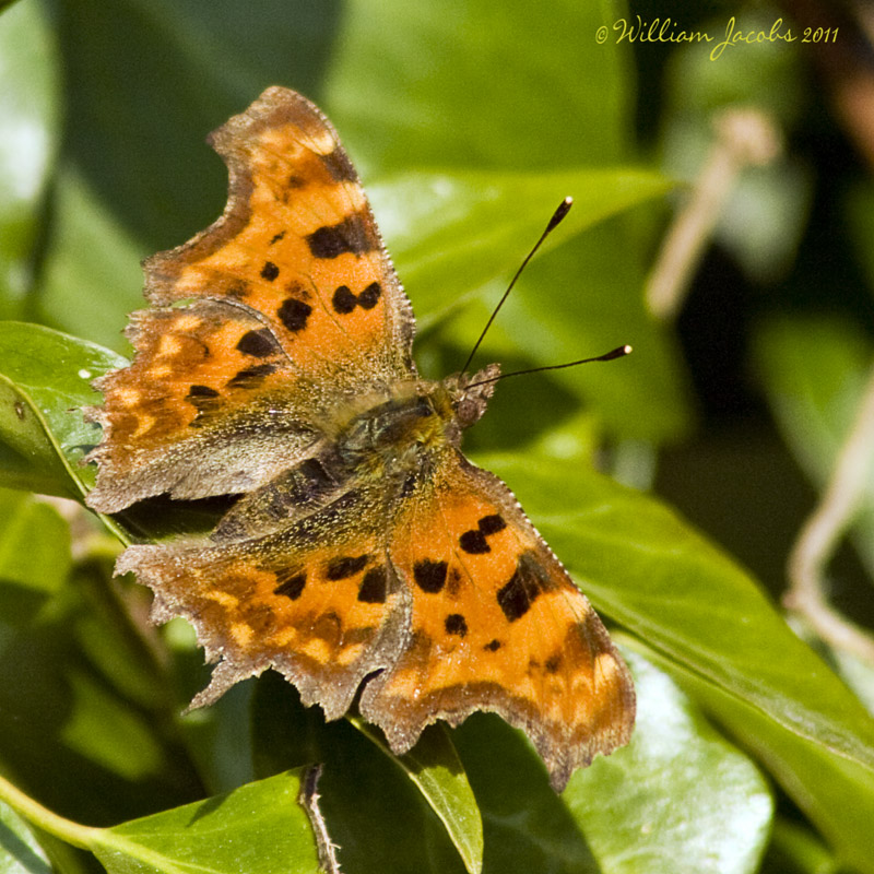 First Comma 2011