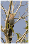 Title: Squirrel Cuckoo