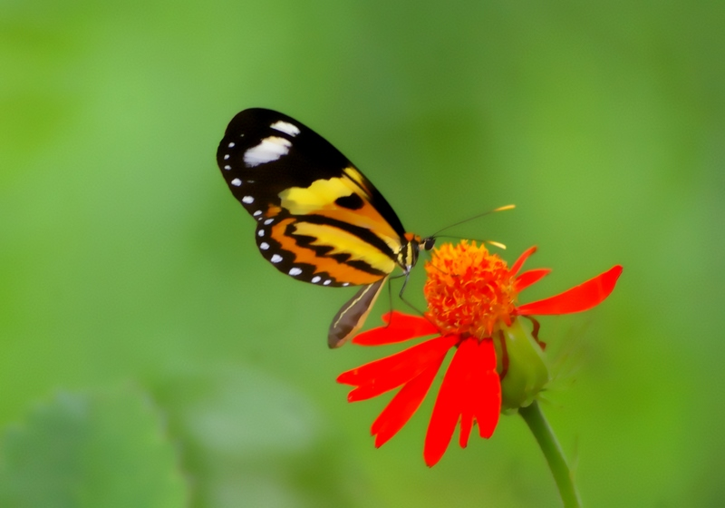 Butterfly in the red flower