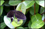 Title: MY POST MANCanon EOS 50 D