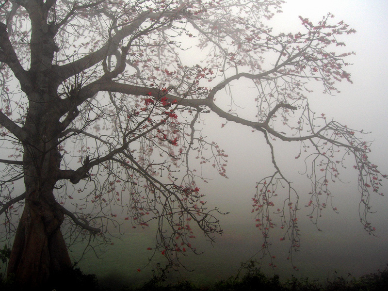 Colours In Mist