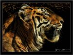 Title: The bengal