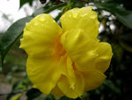 Title: Yellow Bell