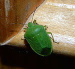 Title: green insect on my door