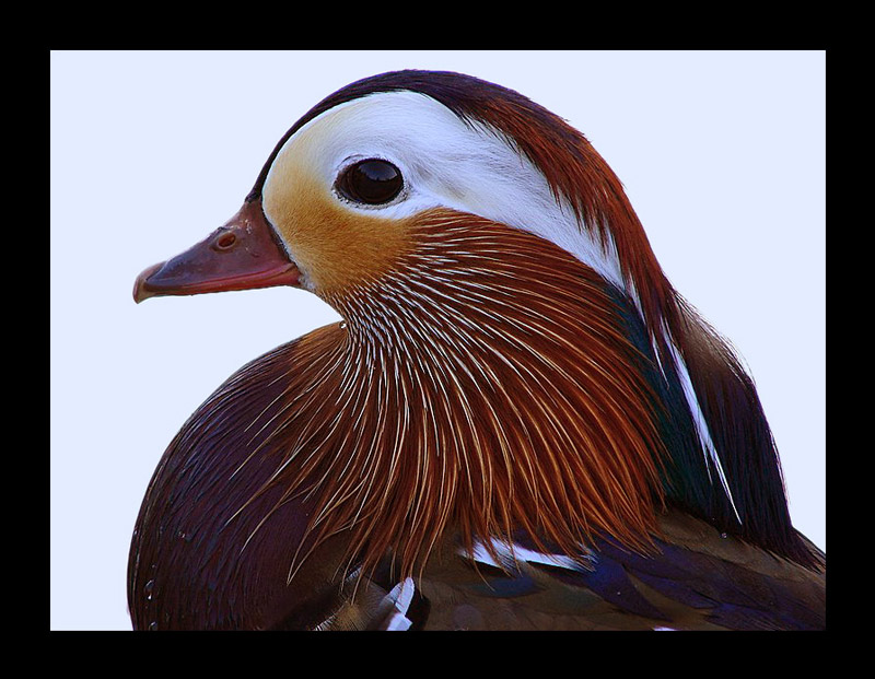 Mandarin  Beauty