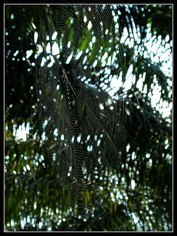 Just a cobweb