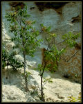 Title: Tree on the rock