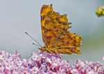 Title: Comma Camera: Nikon D300s