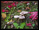 Title: Little White Mushrooms