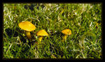 Title: Yellow Mushrooms
