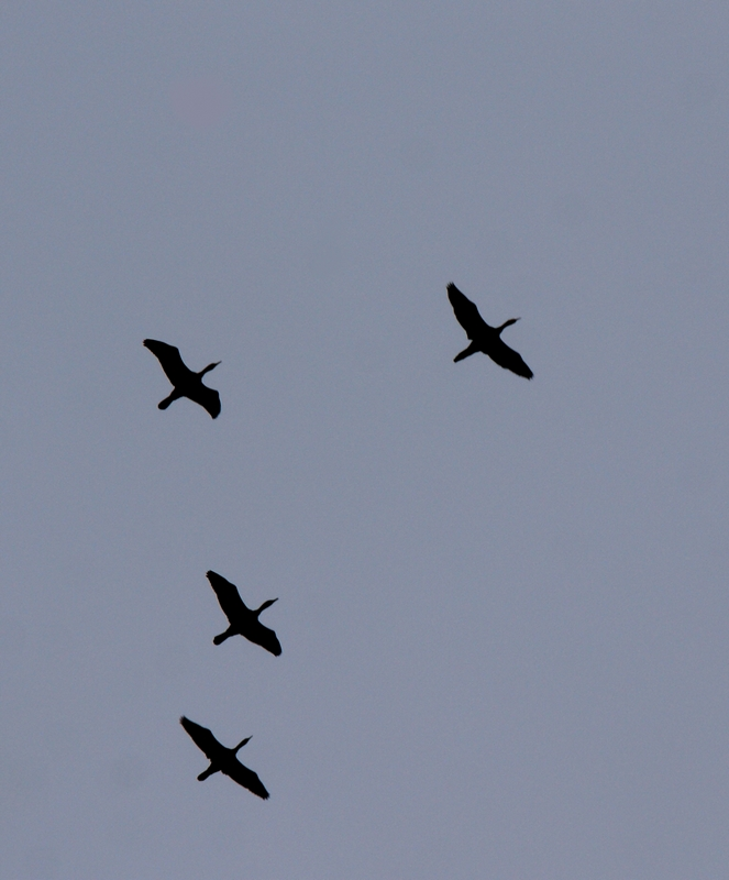 Fly formation