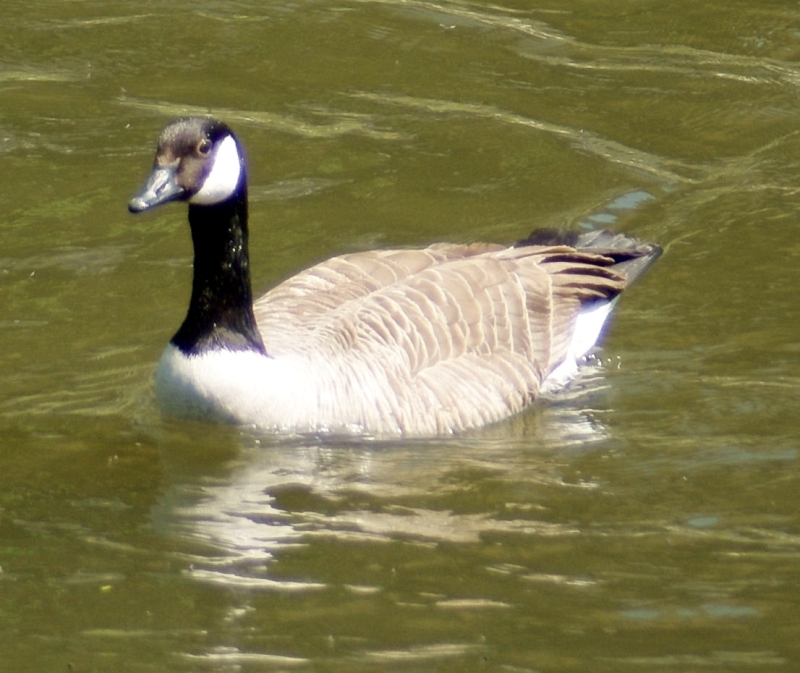 canada goose the south korean opportunity Start grow love your career advance develop build skills learn succeed comprehensive benefits rewards dynamic culture great people gallo winery modesto.