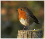 Title: Robin on a post