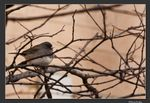 Title: Dark Eyed JuncoCanon EOS REBEL XSi 450D