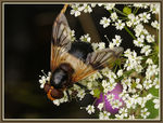 Title: Fly and flowers