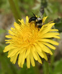 Title: Small bee