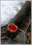 Title: First fungus