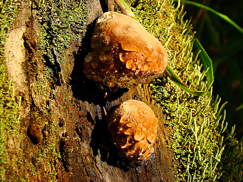 Young tree-fungus in tears