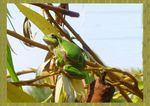 Title: tree-frog