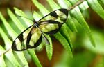 Title: A butterfly with