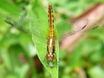 Title: Dragonfly and preyPanasonic FZ40