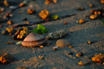 Title: Sea shell