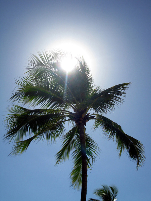 Sun and Coconut tree