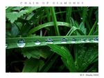 Title: Drops-traffic on Green Highways
