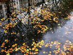 Title: Autumn and mirror-reflections