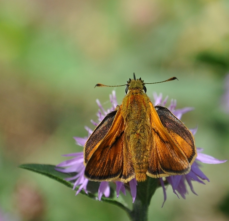 Skipper in a windy day