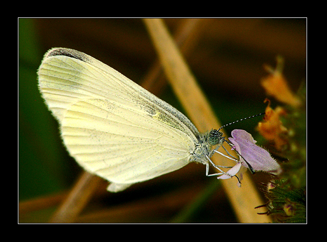 Yet another ordinary butterfly