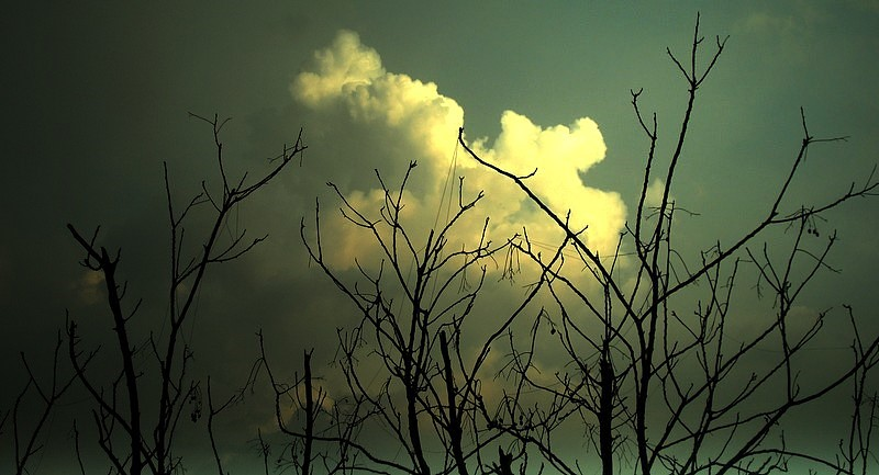 Clouds n Branches