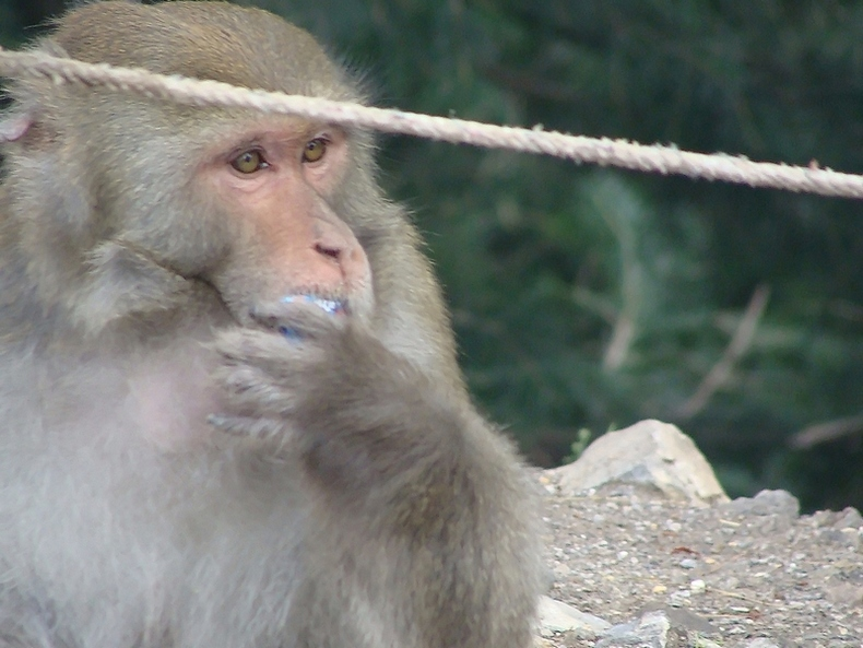 mOnkey 's Thinking abouT Lunch