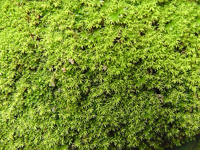 extreme_close_up_of_the_moss