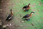 Title: Wood ducks?Nikon FE2