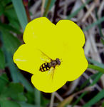 Title: Fly on flower