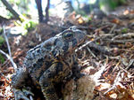 Title: Curious ToadCanon PowerShot SD770IS