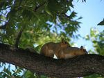 Title: Amorous Squirrels