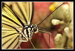 Title: My First Macro.....