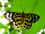 Title: Moth for ID