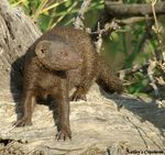 Title: Mongoose