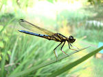 Title: My Dragonfly