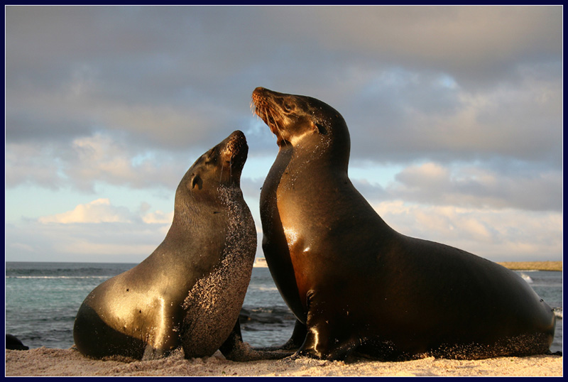 a pair of sealions