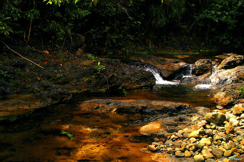 Tropical Water Stream